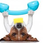 Um plano de emergência para salvar seu pet