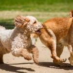 Artigo: Em nome do bem-estar animal