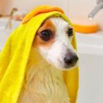 Atenção na hora do banho caseiro