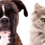 Cães e gatos dividem a preferência no mundo todo