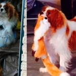 Cão de enfermeira que contraiu o vírus do Ebola tem testes negativos