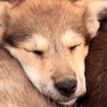 Dicas para garantir o sono do seu cachorro