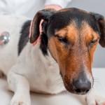 Doença renal põe em risco vida de cães e gatos acima dos sete anos
