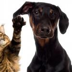 Estudo revela diferenças na personalidade de donos de cães e gatos