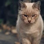 Gatos ameaçam domínio de cães nos lares brasileiros