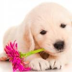 Pet: um presente no Dia das Crianças que exige muita responsabilidade