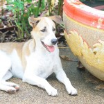 Serviço ajuda a encontrar cachorros desaparecidos em todo o país