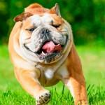 Temperatura elevada exige cuidados com os animais de estimação