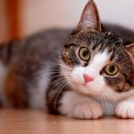 Como escolher o gato ideal para você