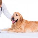 Concursos públicos oferecem vagas para médicos veterinários