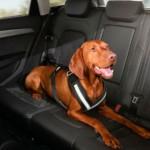 Feira do Automóvel tem novidades até para pets