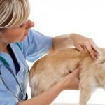 Normas para funcionamento de estabelecimentos veterinários