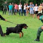 PM do Rio promove competição de cães farejadores