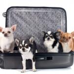 Prepare-se para uma viagem internacional com seu pet