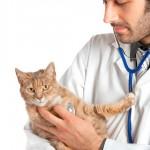 Propostas para atualizar o ensino da Medicina Veterinária em questão