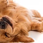 Aprenda os sinais que revelam o humor dos cães