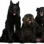 Cuidados com cães acima dos cinco anos de vida