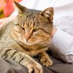 Dicas para uma boa convivência com os gatos