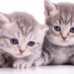 Gatos ganham mais espaço na preferência dos brasileiros