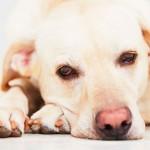 Na luta contra o câncer em cães e gatos