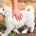 Sinais de alerta para a saúde do seu pet