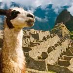 Conferência, no Peru, debate avanços da Medicina Veterinária