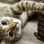 Conheça os sinais de envelhecimento dos gatos