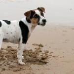 Cuidados com animais de estimação nas praias