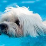 Dicas para amenizar o calor nos animais de estimação