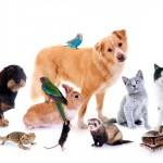 Mudanças na formação de comissões de ética para uso de animais em pesquisa