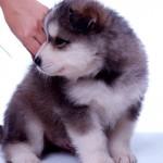Veterinária recomenda vacina em cães para prevenir leptospirose no verão