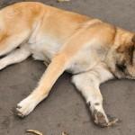 Como ser solidário com cães e gatos abandonados