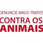Conheça os caminhos para denunciar maus-tratos contra os animais