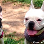 Disque-Denúncia também ajuda a combater violência contra animais de estimação