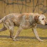 Exemplo contra o abandono de cães