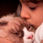 Gatos: bons companheiros para a vida inteira