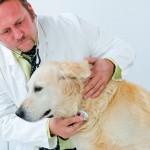 Medicina Veterinária busca fortalecer participação na sociedade