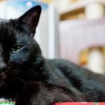 Mitos e maus-tratos: gato preto não dá azar