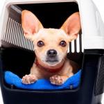 Pets a bordo nos aviões ao lado de seus donos