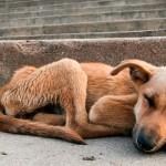 Prefeitura de Vitória aumenta multa para abandono de animais