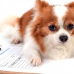 Regras para documentos veterinários são padronizadas