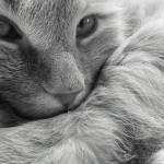 10 sinais que podem indicar que seu gato está sob estresse!