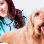 Médicas veterinárias e zootecnistas ganham espaço