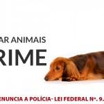 Nova Friburgo se mobiliza para combater maus-tratos aos animais