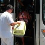 São Paulo aprova lei que libera acesso de animais em ônibus