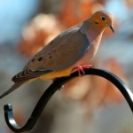 Tecnologia para reconhecer espécies de animais pelos sons