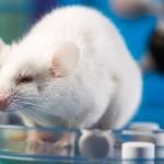 Uso de animais em pesquisa tem nota explicativa