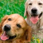 Adoção de pets via redes sociais