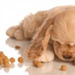 Cuidados na hora de escolher a raça de cão para o seu filho