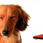 Dicas para medicar cães e gatos